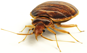 Call (408) 214-6660 to have a technician get you started on bed bug removal.